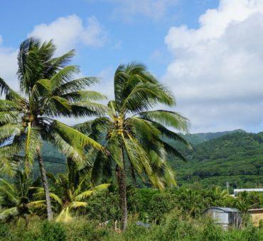 Wyspy Cooka - smak raju.