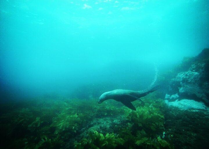 Najlepsze australijskie doświadczenia. Nurkowanie z fokami i śpiew wielorybów.