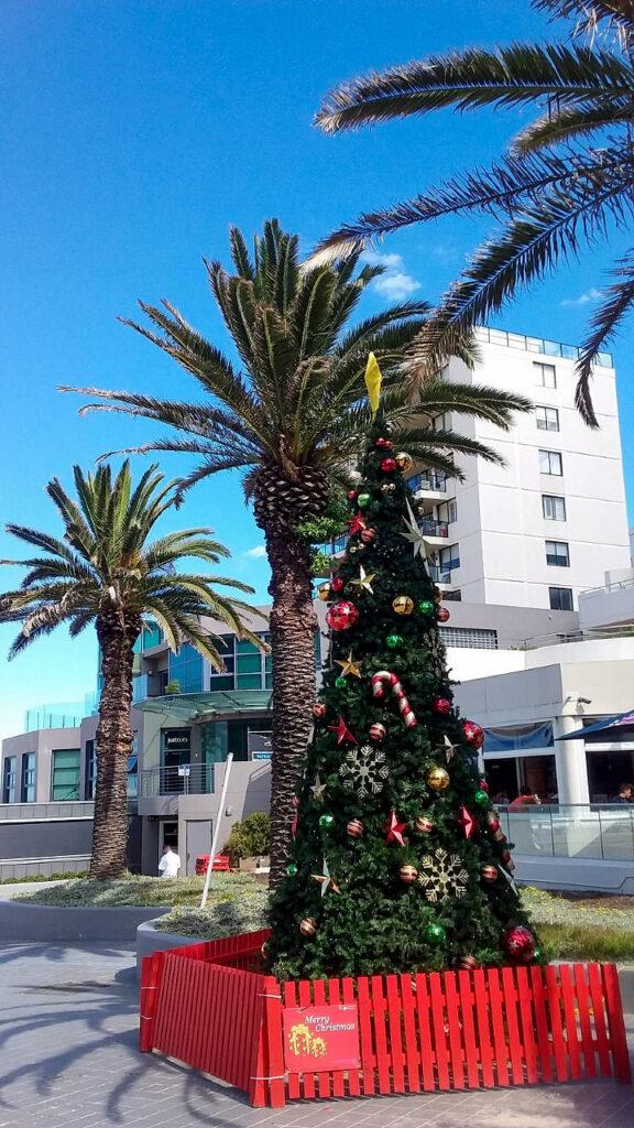 Boże Narodzenie w Australii, choinka pośrodku palm